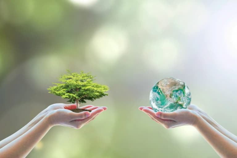 What is the difference between an ecolabel and a biolabel?